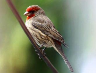 Las aves urbanas se interesan por las colillas de los cigarros