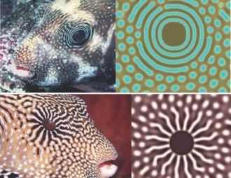 Fractal geometry for animal biometrics