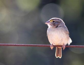 El coro del amanecer de las aves