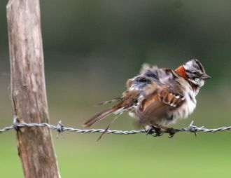 The learning advantage in urban bird life