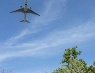 Las aves aumentan la vigilancia y dejan de comer al aumentar el ruido producido por el paso de los aviones