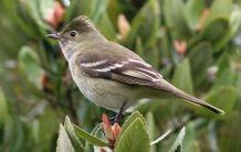 Aves en la Patagonia